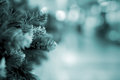 Green needles on spruce, pine branches. Abstract blurred holiday toned background with Bokeh. Selective focus. Winter Royalty Free Stock Photo
