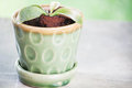 Green new sprout in ceramic pot Royalty Free Stock Photo