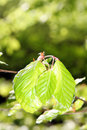 Green oak leaves Stock Images