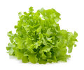 Green oak lettuce leaf Royalty Free Stock Photo