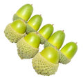 Green oak tree acorns a group of autumn isolated on a white background Royalty Free Stock Photo