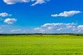 Green oats field Royalty Free Stock Photo