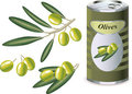 Green olives, olive branch and bank of olives Stock Photos