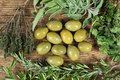 Green olives with several herbs around on wooden table.