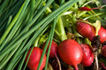 Green onion and radishes Royalty Free Stock Photos