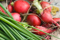 Green onion and radishes leaves a bunch of fresh Stock Photography
