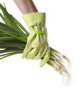 Green onions Royalty Free Stock Photos