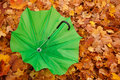 Green opened umbrella lies against autumn leaves Royalty Free Stock Photo