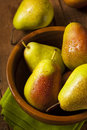 Green organic healthy pears ripe and ready to eat Stock Photography