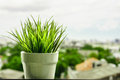 Green organic wheat grass against Royalty Free Stock Photo