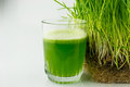 Green organic wheat grass juice ready to drink close up Royalty Free Stock Photography