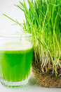 Green organic wheat grass juice ready to drink on white Royalty Free Stock Photos