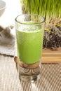 Green Organic Wheat Grass Shot Royalty Free Stock Photo