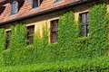 Green overgrown house windows in wall of plant Stock Photography