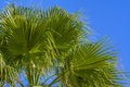 Green palm fronds Royalty Free Stock Photo