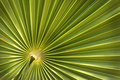 Green Palm Leaf Background