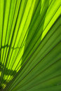 Green palm leaf close up of Stock Image