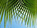 Green palm leaf detail on sea resort Stock Images
