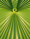 Green palm leaf frond symmetrical geometric design background Royalty Free Stock Photos
