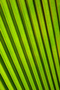 Green palm leaf perfect close up Royalty Free Stock Photos