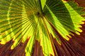 Green palm leaf with shadows at a tropical garden
