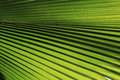 Green Palm Leaf Texture