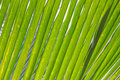 Green palm leaf textured background Royalty Free Stock Photo