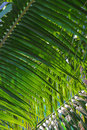 Green palm leaf textured background Stock Photos