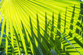 Green palm leave art of pattern Stock Image
