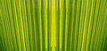 Green Palm Leaves Texture Back...