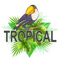 Green palm leaves and toucan Royalty Free Stock Photo