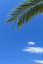 Green palm tree Royalty Free Stock Photo