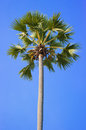 Green palm tree on blue sky background