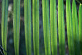 Green palm tree leaf Stock Photos