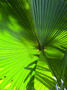 Green palm tree leaf Royalty Free Stock Photo