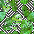 Green palm tree leaves on black and white geometric background. Vector summer seamless pattern.