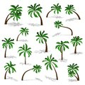 Green palm trees set with shadow isolated on white background