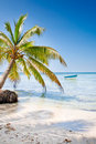 Green palms on white sand beach under blue sky Royalty Free Stock Image