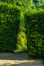 Green park, freshly cut vegetation, well maintained park, walkin