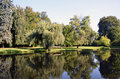 Green park landscape with big osier and water pond photography Stock Images