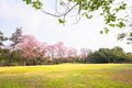 Green park landscape and grass field garden golf Royalty Free Stock Photo