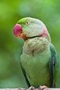 Green Parrot Bird Stock Photo