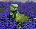 Zelený papagáj na modrý kvety