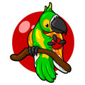 Green Parrot with a red background, bird, tropics