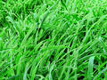 Green Pastures Royalty Free Stock Image