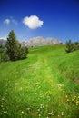 Green path to the mountains Stock Photo