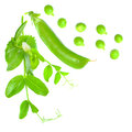 Green pea with leaves on white background Stock Image
