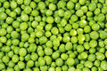 Green peas frescoes and freshly reaped Royalty Free Stock Photos