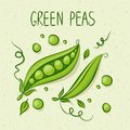Green peas text above vector illustration Stock Photography