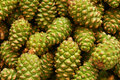Green pine cones Royalty Free Stock Image